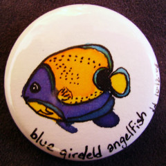 Badge Blue girled Angelfish