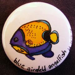 Badge Blue girled Angelfish