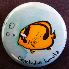 Badge Poisson Papillon-Chaetodon Lunula