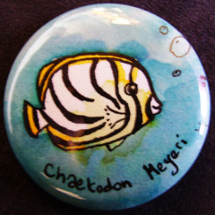 Badge Chaetodon Meyeri