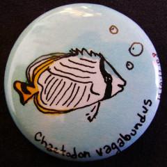 Badge Chaetodon Vagabundus
