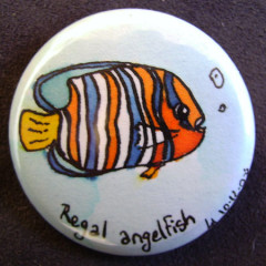 Badge Regal Angelfish